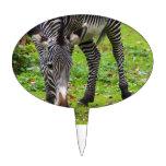Zebra Wildlife Photo Cake Toppers