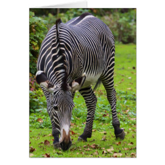 Zebra Wildlife Photo Greeting Card