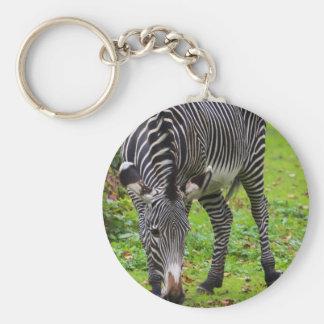 Zebra Wildlife Photo Keychains