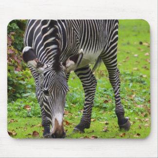 Zebra Wildlife Photo Mouse Pad