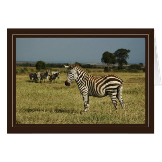 Zebra wildlife safari cards