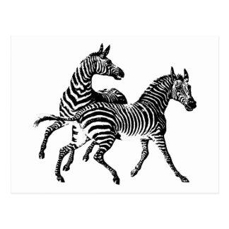 Zebra Zebras Vintage Wood Engraving Postcard
