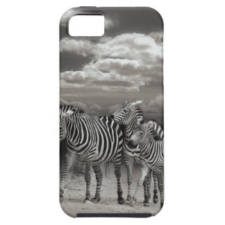 Zebras Animal Gifts iPhone SE/5/5s Case