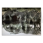 Zebras at Watering Hole Card