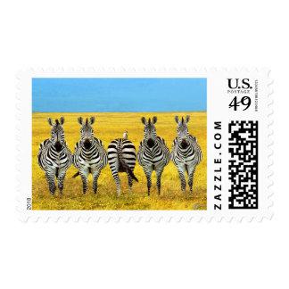 Zebras at wildlife reserve postage