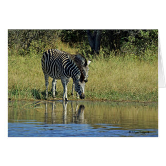 ZEBRAS COMING TO DRINK greeting card