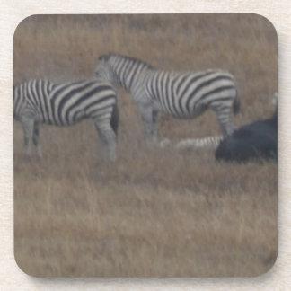 zebras & cows in field beverage coaster