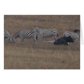 zebras & cows in field card