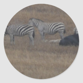 zebras & cows in field classic round sticker
