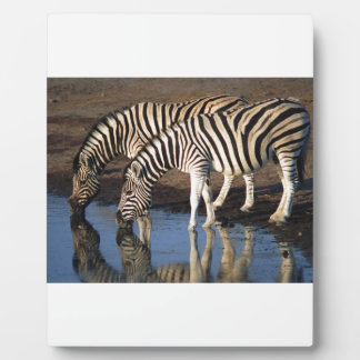 Zebras Drinking at the Watering Hole Plaque
