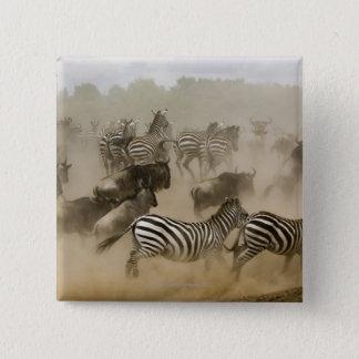 zebras (Equus burchelli) and wildebeest Button