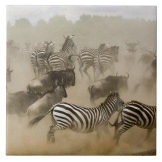 zebras (Equus burchelli) and wildebeest Ceramic Tile