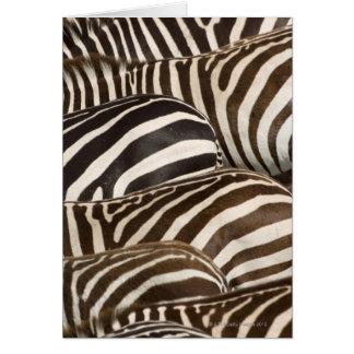 Zebras' (Equus quagga) stripes, Masai Mara Greeting Cards