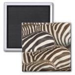 Zebras' (Equus quagga) stripes, Masai Mara Magnet