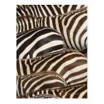 Zebras' (Equus quagga) stripes, Masai Mara Postcard