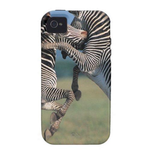 Zebras fighting (Equus burchelli) Vibe iPhone 4 Cover