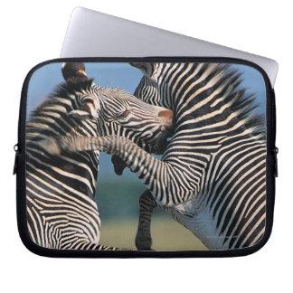 Zebras fighting (Equus burchelli) Computer Sleeves