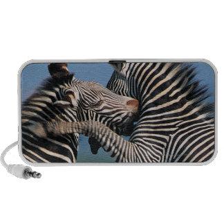 Zebras fighting (Equus burchelli) Travel Speaker
