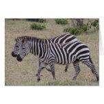 zebras forever greeting cards