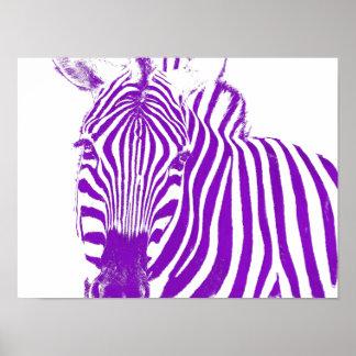Zebra's Gaze Poster