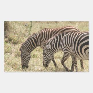zebras graze rectangular sticker