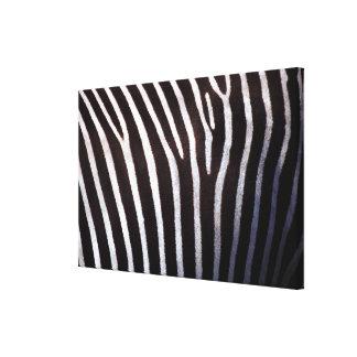 zebra's hide canvas print