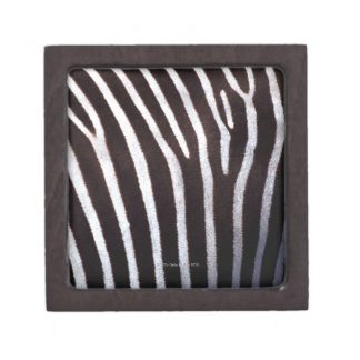 zebra's hide gift box
