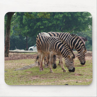 zebras in a wild animal zoo mouse pad