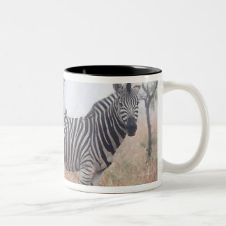 Zebras in early morning dust, Kruger National Two-Tone Coffee Mug