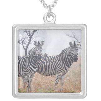 Zebras in early morning dust, Kruger National Pendants