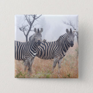 Zebras in early morning dust, Kruger National Pinback Button