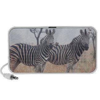 Zebras in early morning dust, Kruger National Travel Speakers