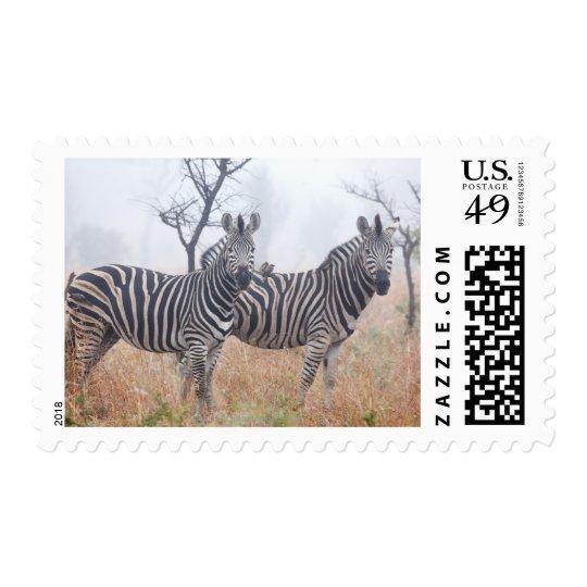 Zebras in early morning dust, Kruger National Stamp