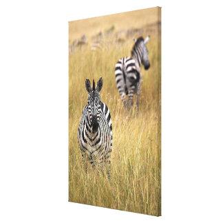Zebras in tall grass canvas print