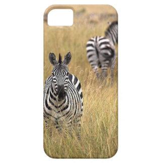 Zebras in tall grass iPhone SE/5/5s case