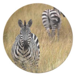 Zebras in tall grass plate