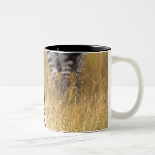 Zebras in tall grass Two-Tone coffee mug