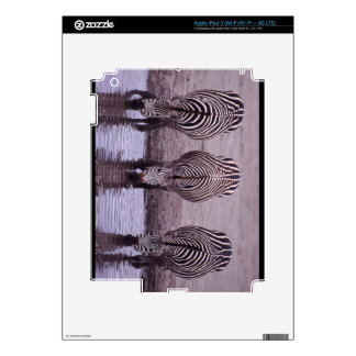 ZEBRAS In The Wild iPad 3 Decals