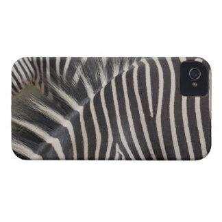 Zebras iPhone 4 Case-Mate Case