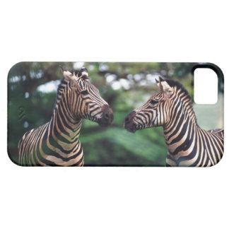 zebras iPhone SE/5/5s case