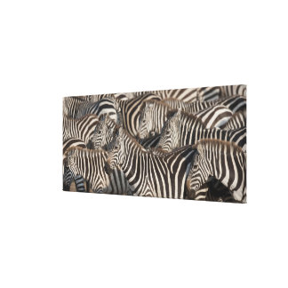 Zebras, Kenya, Africa Canvas Print