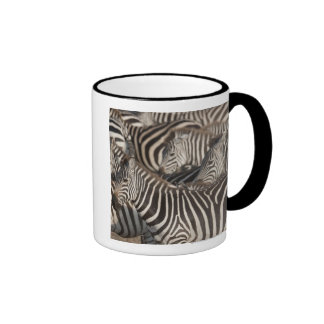 Zebras Kenya Africa Coffee Mugs