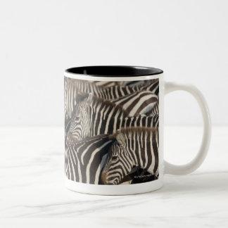 Zebras Kenya Africa Mugs