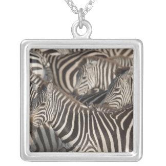 Zebras, Kenya, Africa Silver Plated Necklace