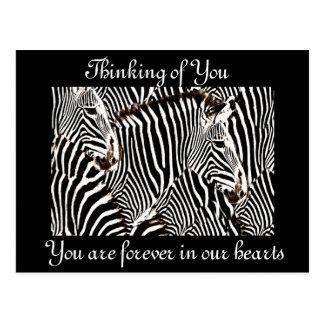 Zebras love_ postcard