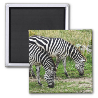Zebras Magnet