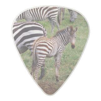Zebras on the Serengetti Plains, Equus quagga, Acetal Guitar Pick