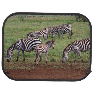Zebras on the Serengetti Plains, Equus quagga, Car Mat