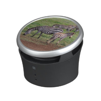 Zebras on the Serengetti Plains, Equus quagga, Speaker