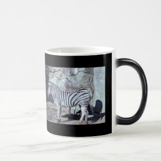Zebras Photo Magic Mug